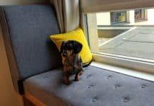 notre chien à l'hôtel Schani