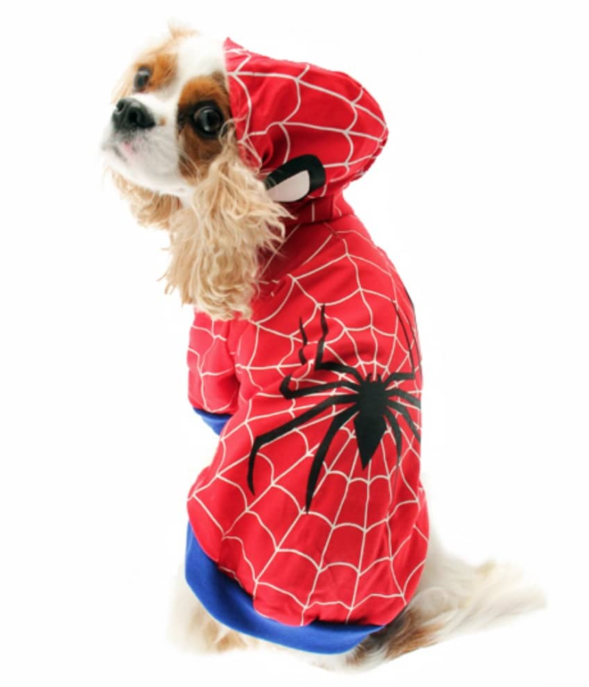Marvel Spiderman dog superhero costume, available on Baxterboo