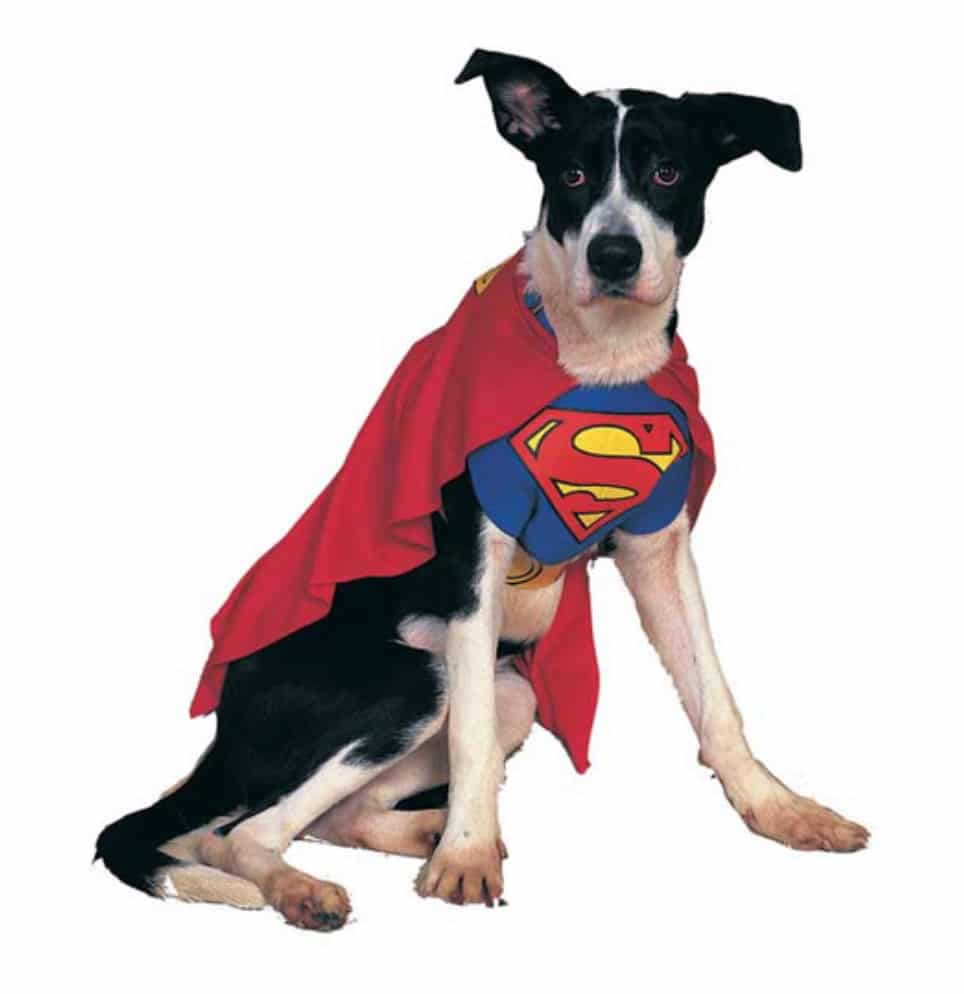 Marvel Superman superhero dog costume, available on Baxterboo