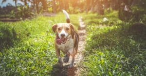 chien qui court sur un sentier