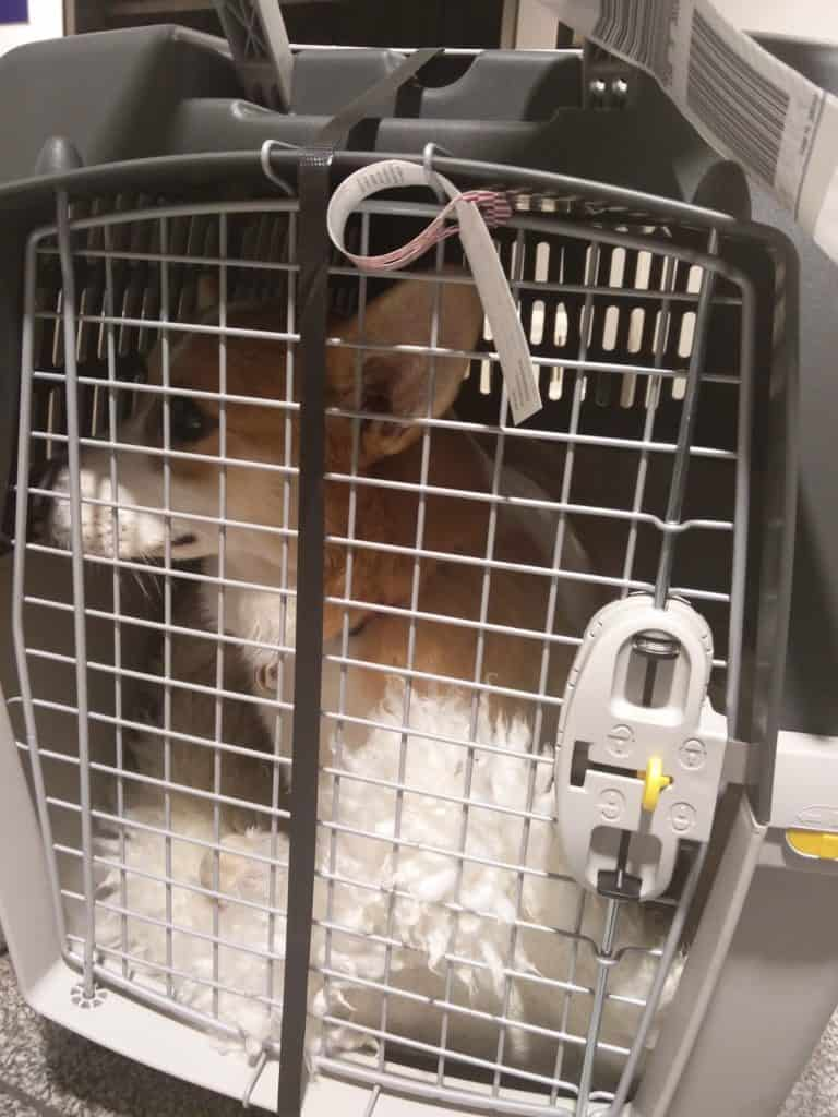 McOwain flew in an IATA-compliant cage on board Air Transat on his trip to Canada.