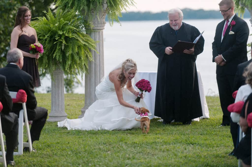 bride bending down to pet her puppy during the ceremony