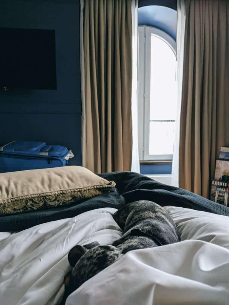 Dachshund dans le lit de l'auberge saint antoine à québec