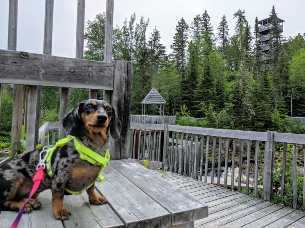 chien au moulin des pionniers à la doré québec