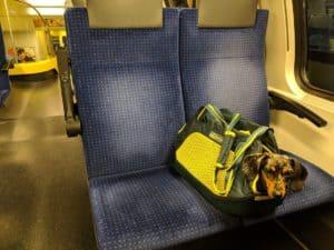 sac pour chien Kurgo Explorer