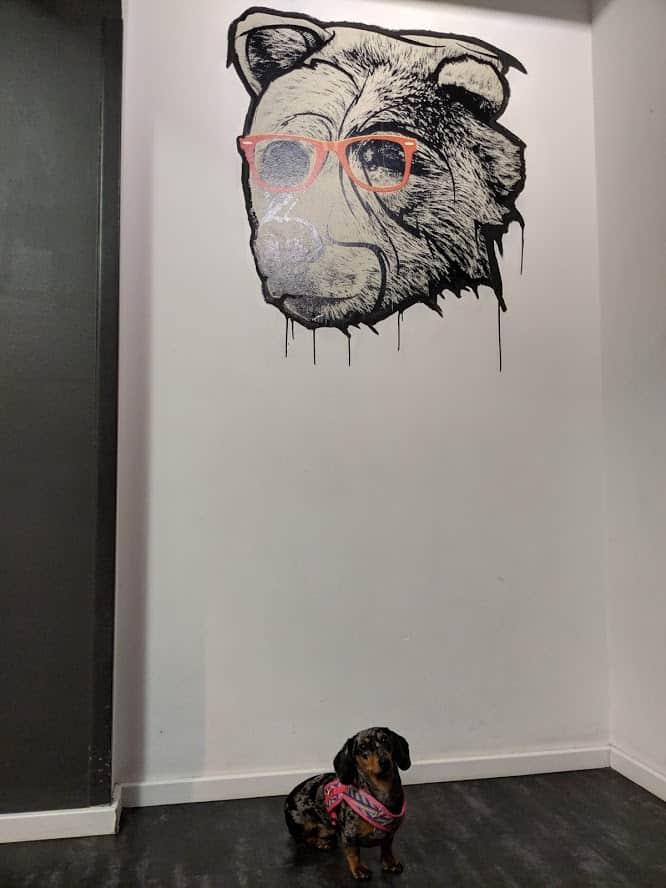 notre chien dans notre hôtel à Berlin