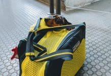 dachshund dans un sac de transport kurgo explorer
