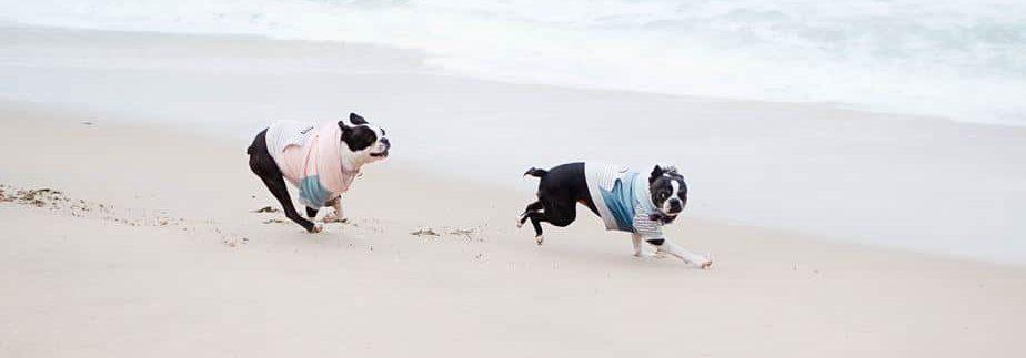 Deux chiens sur la plage