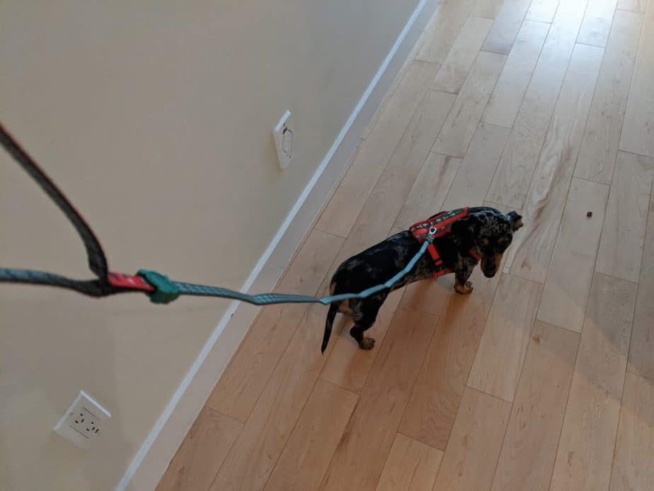 Christmas themed dog leash and harness by Zeedog