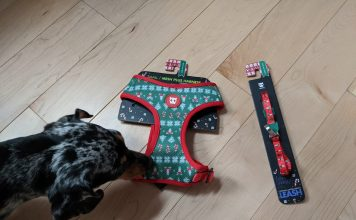 Rudolph Zeedog's harness and leash