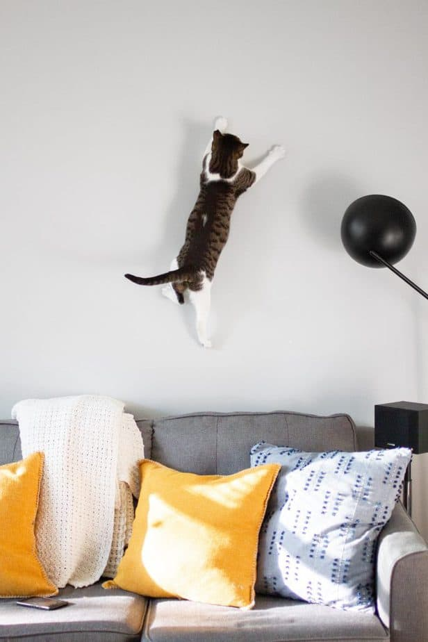 cat climbing the wall