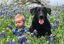 kid and black labrador in a meadow