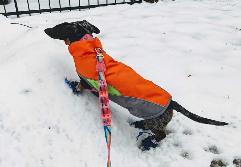 miniature dachshund waterproof coat