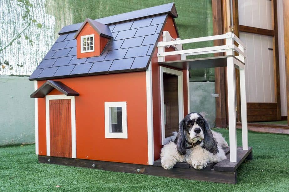 build your own DIY dog house