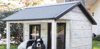 diy dog houses
