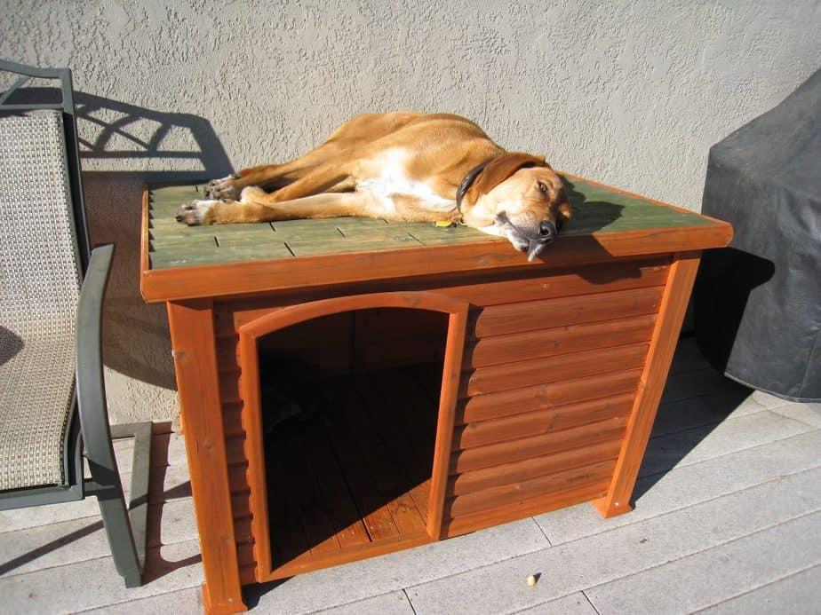DIY dog houses doors