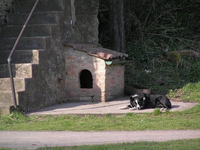 DIY dog houses sizes