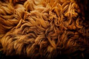 dog fur