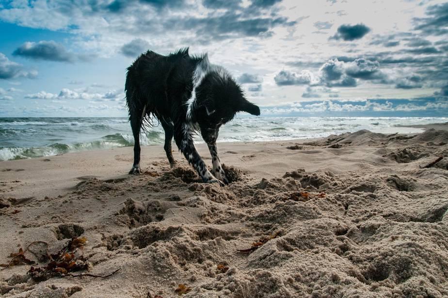 liste des plages qui acceptent les chiens au Québec