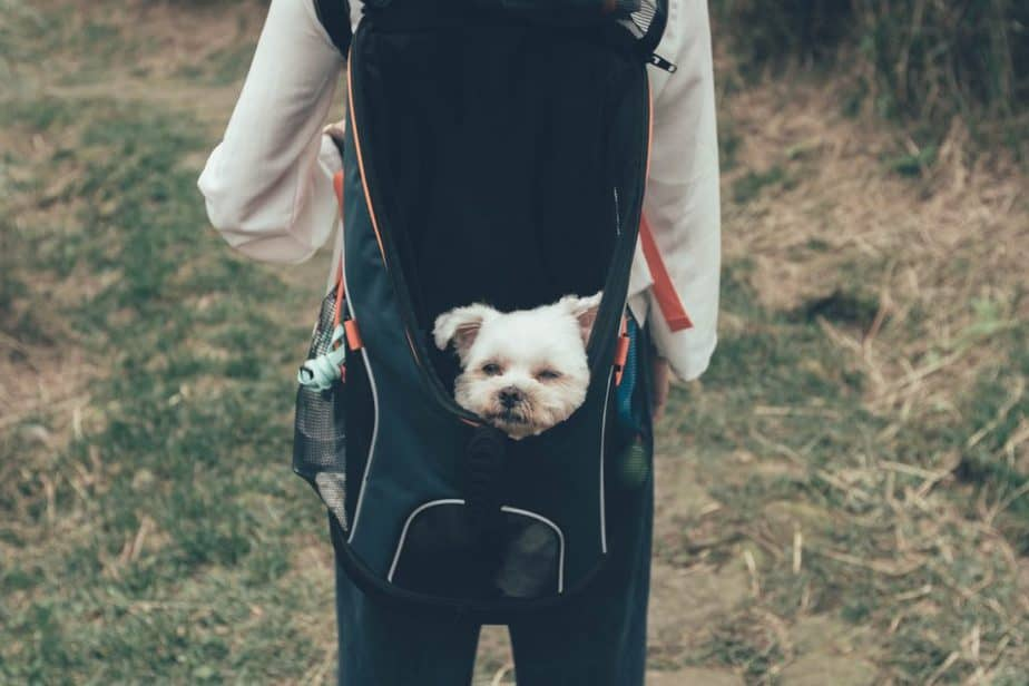Dog in a backpack during a hike