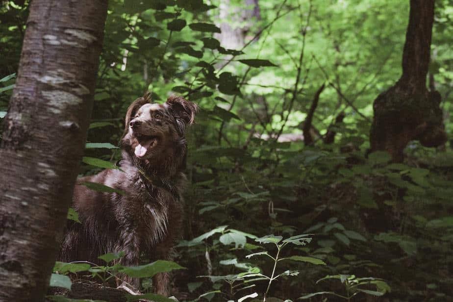 Taking a Dog on a Hike