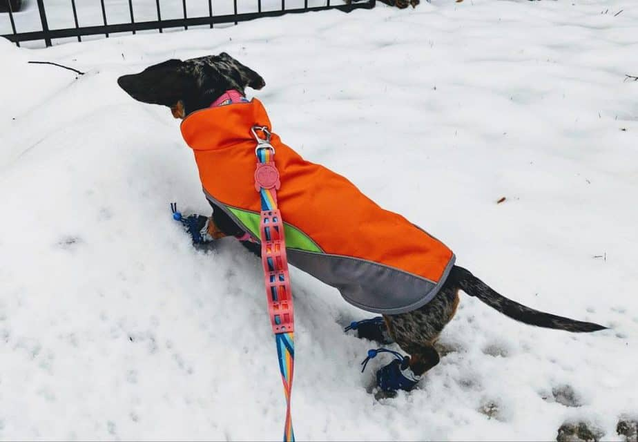 Long dog wearing an orange coat in the snow