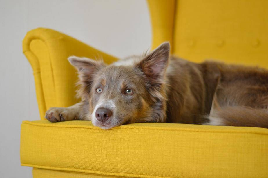 how to care for senior dogs